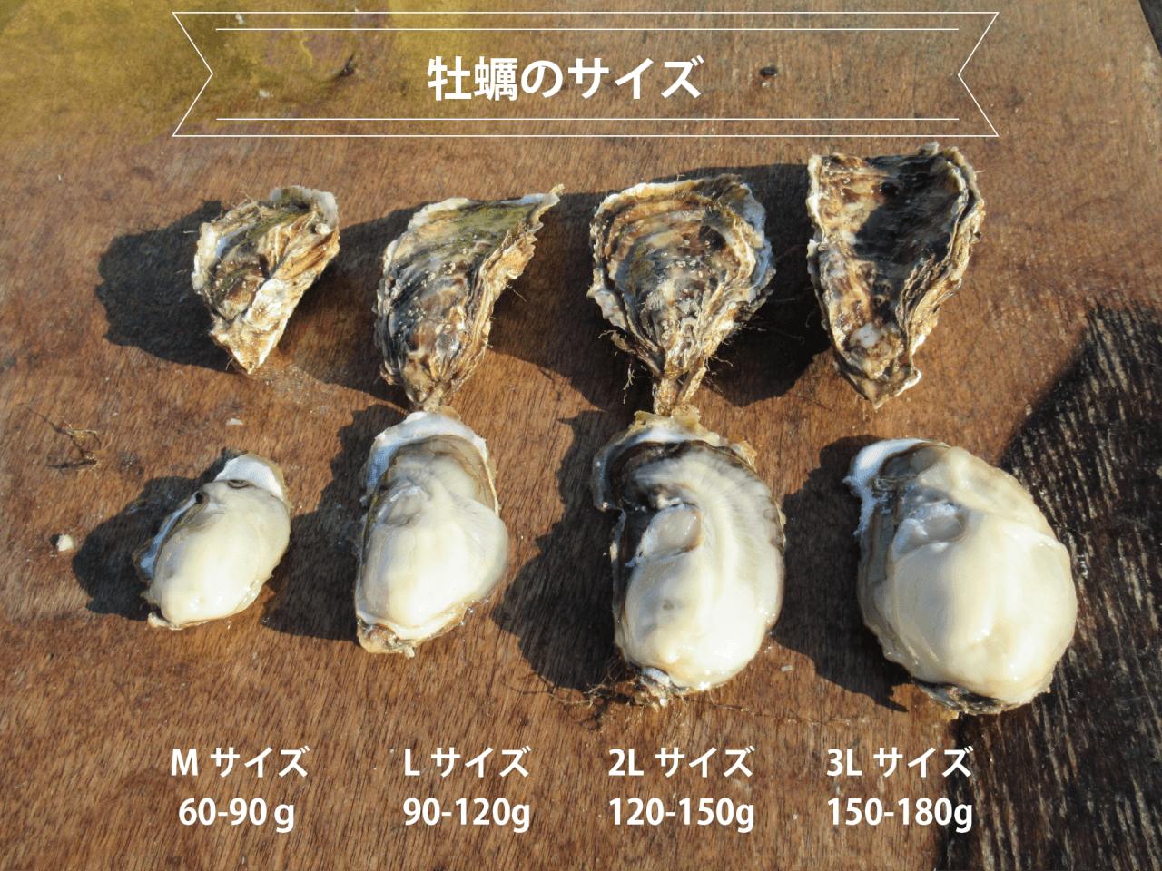 厚岸牡蠣マルえもんの大きさ